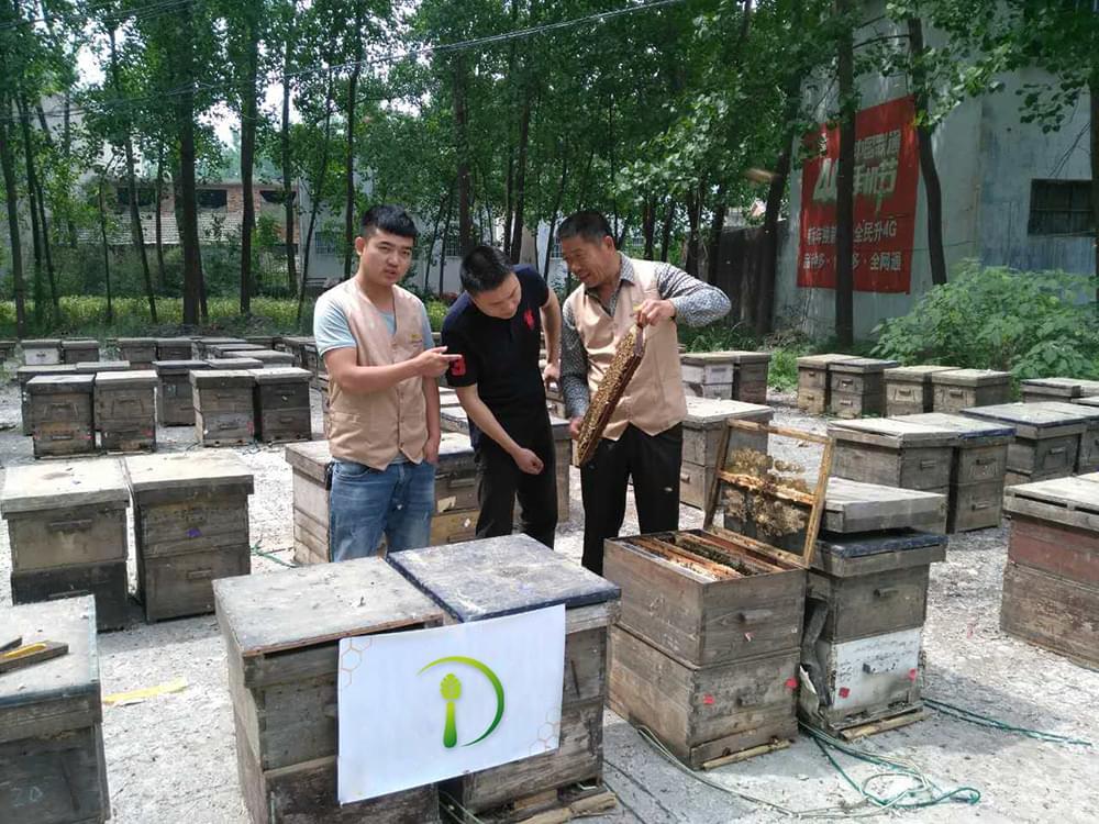 Honey-processing-technology